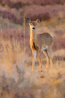 Art from Photography - Wildlife