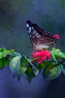 butterfly painting created from Jeff Wendorf's photography using digital art techniques