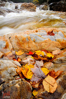 Fall stream in Vermont