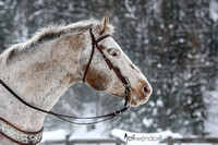 Winter Horse Portrait II