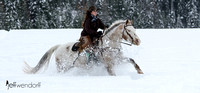 Horse ride in the winter snow