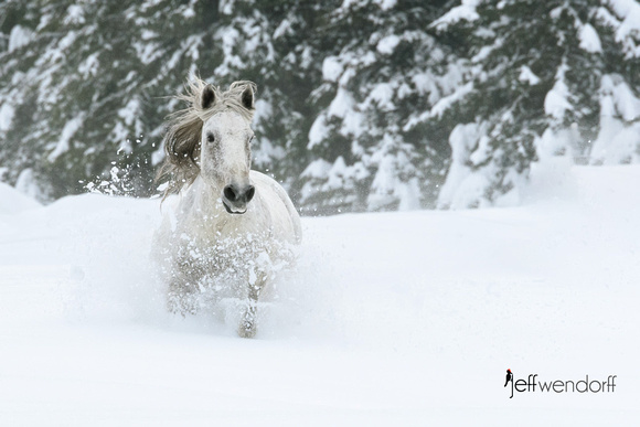 White on White - Horse in Deep Snow