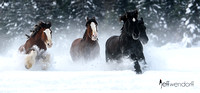 Winter Race - Clydesadales and Percherons