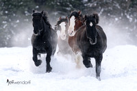 Snow y Run - Draft Horses on the Run