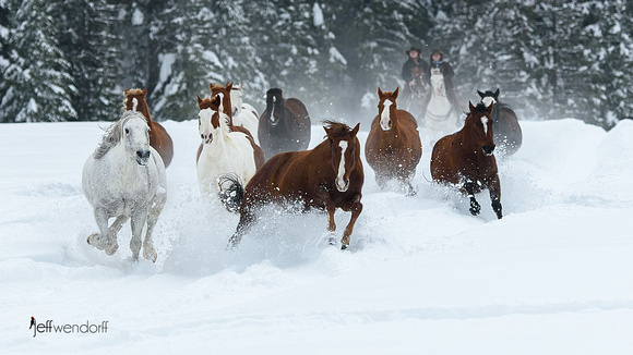 Stampede in the Snow